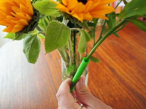 Cứu tính của hoa