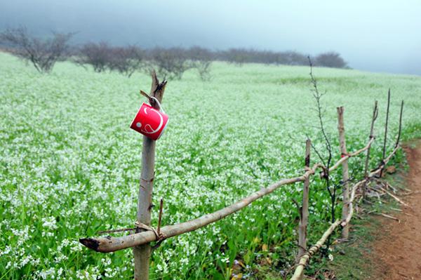 Du lịch tháng 12 - Mộc Châu mùa hoa cải